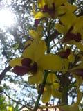 Fleur d'orchidée sur la mouche Image libre de droits