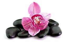 Fleur d'orchidée sur la pierre Photographie stock libre de droits