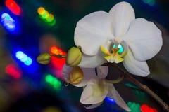 Fleur d'orchidée sur un fond foncé coloré Photographie stock