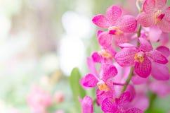Fleur d'orchidées Images libres de droits