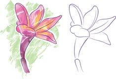 Fleur d'orchidée Photo libre de droits