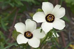 Fleur d'une heure Images libres de droits