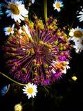 Fleur dans l'aube Images stock