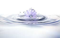 Fleur dans l'eau Photos stock