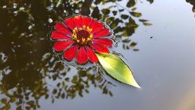 Fleur dans l'eau Image stock