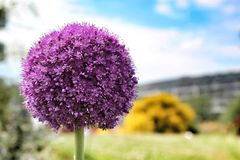 Fleur dans l'extrémité de mille de fleur image libre de droits