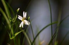 Fleur dans l'herbe Images stock