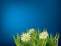 Fleur dans l'herbe verte Photos libres de droits