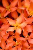 Fleur dans l'instruction-macro Photographie stock