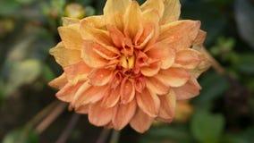 Fleur dans l'orange Photos libres de droits