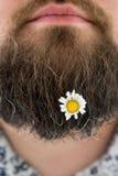 Fleur dans la barbe Photo libre de droits