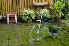 Fleur dans la bicyclette de blanc de pot Photo libre de droits