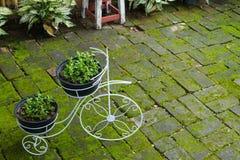 Fleur dans la bicyclette de blanc de pot Photo stock