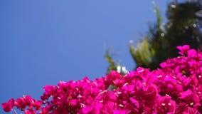 Fleur dans la caméra de nature photos stock