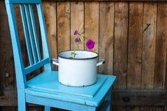 Fleur dans la casserole Photo stock