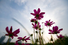 Fleur dans la fin d'été Images stock