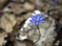 Fleur dans la forêt Image stock