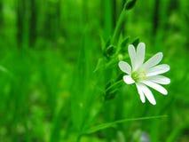 Fleur dans la forêt Photos stock