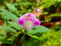 Fleur dans la forêt Photo libre de droits