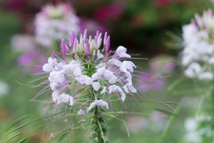 Fleur dans la forêt Images libres de droits