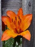Fleur dans la frontière de sécurité. Photos stock