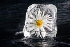 Fleur dans la glace avec le point de vue Image libre de droits