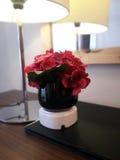 Fleur dans la lumière Photo stock