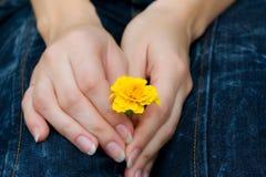 Fleur dans la main Photo libre de droits