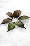 Fleur dans la neige Image stock