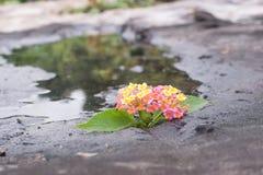 Fleur dans la pierre et l'étang Images libres de droits