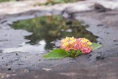 Fleur dans la pierre et l'étang Image libre de droits