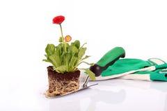 Fleur dans la saleté et la truelle Photo stock