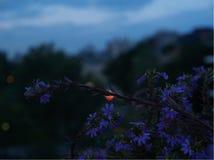 Fleur dans la ville photo libre de droits