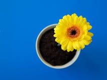 Fleur dans le bac image stock