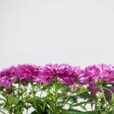 Fleur dans le bac image libre de droits