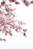Fleur dans le bassin Photographie stock