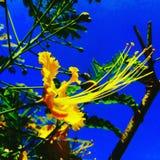 Fleur dans le ciel photos stock