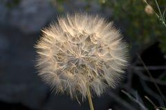 Fleur dans le coucher du soleil Photographie stock libre de droits