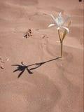 Fleur dans le désert Images stock