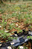 Fleur dans le détritus Photographie stock libre de droits