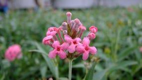Fleur dans le jardin Image stock