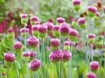 Fleur dans le jardin Photographie stock