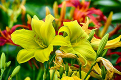 Fleur dans le jardin Image libre de droits