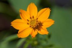 Fleur dans le jardin Photos stock