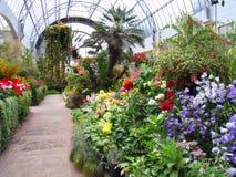 Fleur dans le jardin Images libres de droits