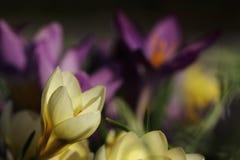 Fleur dans le jardin Photo libre de droits