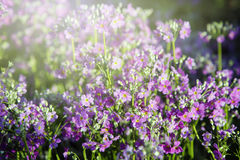 Fleur dans le jardin Images stock