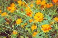 Fleur dans le jardin avec le foyer sélectif photo libre de droits