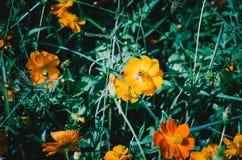 Fleur dans le jardin avec le foyer sélectif images libres de droits