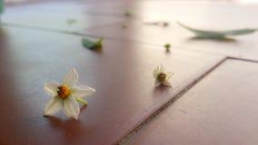 Fleur dans le plancher Photo libre de droits